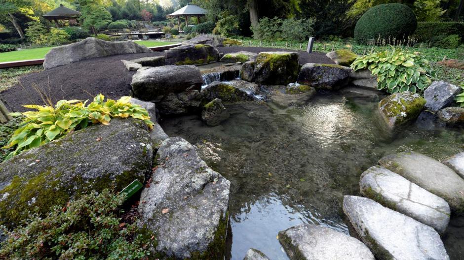 Augsburg Botanischer Garten Aggressiver Pilz Setzt Japangarten