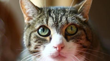 Wer eine Katze allein zu Hause lässt,  muss sich auf Überraschungen einstellen.