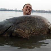 Waller wachsen ein Leben lang. Dieses Rekord-Exemplar wog 117 Kilogramm und war 2,51 Meter lang.