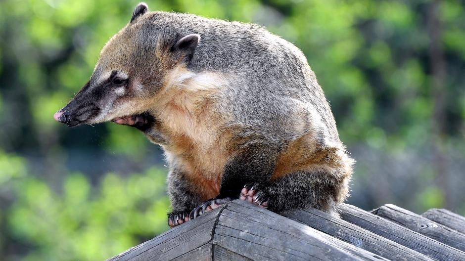 Augsburg Der Augsburger Zoo Hebt Die Preise Für Einzelkarten An