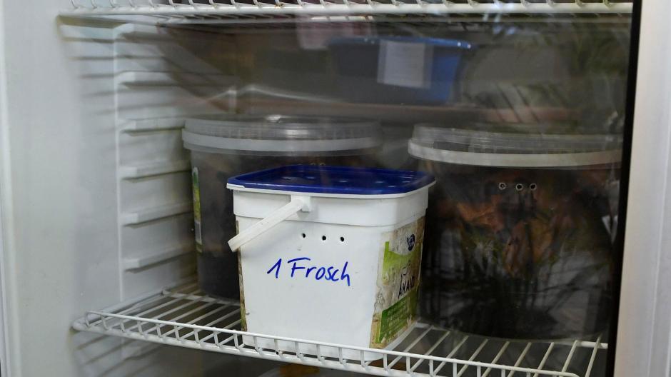 Kühlschrank Ins Auto Legen : Augsburg wenn zoo tiere im kühlschrank überwintern lokales