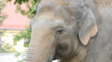 Die Elefanten im Zoo haben bald ein neues Zuhause.