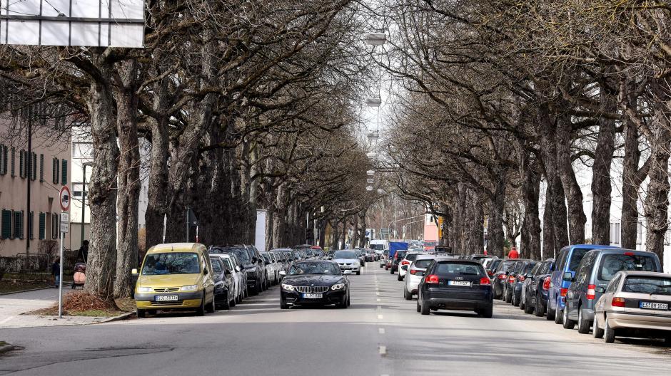 Die Kastanienallee in der nördlichen Rosenaustraße ist als mögliche Route für die Straßenbahnlinie 5 auf dem Abstellgleis gelandet. Die Sozialfraktion kritisiert das.