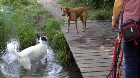 Diese Hunde sind gut erzogen. Deshalb dürfen sie im Stadtwald von der Leine und bei Hitze ein erfrischendes Bad in den Bächen nehmen. Doch nicht alle Hundehalter haben ihre Tiere im Griff.