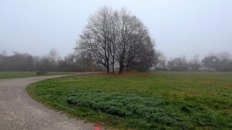 Schön gewachsene Bäume und üppiges Grün sind aktuell dort zu finden, wo in den Lechauen am Griesle ein Baugebiet für die Firnhaberau genehmigt worden ist. Doch es gibt auch Proteste gegen 14 Einfamilienhäuser.