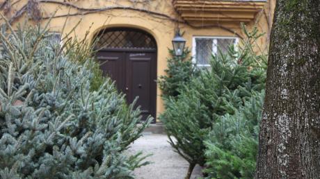 In der Fuggerei etwa kann man jedes Jahr Christbäume aus den stiftungseigenen Kulturen in Blumenthal und Holwinkel erwerben. Es gibt weitere Möglichkeiten, unbehandelte Weihnachtsbäume aus der Region zu kaufen.