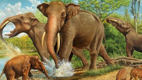 Ur-Elefanten zogen vor Millionen von Jahren durch unsere Gefilde. Unser Bild vermittelt einen Eindruck von diesen Tieren. Es handelt sich dabei um den Druck eines Gemäldes von Karol Schauer.