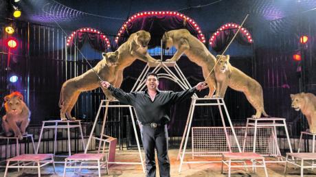 Ein Höhepunkt für viele Zirkusbesucher: der Auftritt der Löwen.