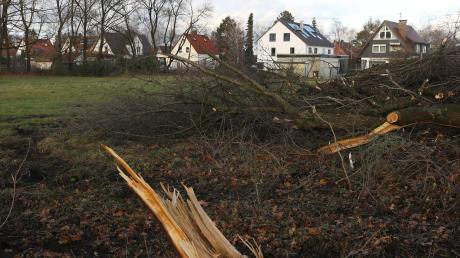 Nach Fällung von Bäumen neben der Kleingartenanlage Griesle können 14 Grundstücke in der Firnhaberau nun bebaut werden.