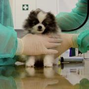 Hundebaby Ella muss neun Wochen in Quarantäne. Das Tier kam aus Bulgarien mit falschen Papieren nach Augsburg.