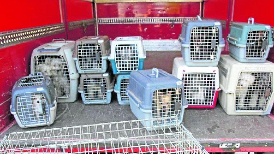 Eine 49 Jahre alte Frau steht wegen Tiermisshandlung vor Gericht. Sie hatte 20 Hunde in einem Kombi bei heißem Wetter gelassen. Die Feuerwehr brachte die 20 Hunde ins Tierheim.