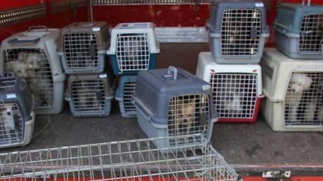 Die Berufsfeuerwehr brachte die Hunde ins Augsburger Tierheim.
