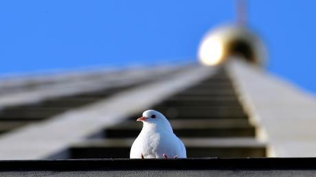 Augsburg geht mit einer besonderen Strategie gegen die massive Vermehrung der Tauben vor.  Die Lösung findet  immer mehr Nachahmer.