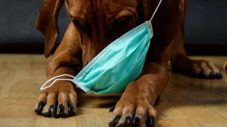 Manch besorgter Hundehalter denkt sicherlich schon an eine Atemmaske für seinen vierbeinigen Schatz.