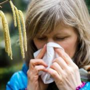 Allergiemedikamente sind eine effektive Hilfe bei Heuschnupfen. Eine verbreitete Nebenwirkung ist jedoch Müdigkeit. Besonders beim Autofahren kann diese zum Problem werden. Foto: Arno Burgi