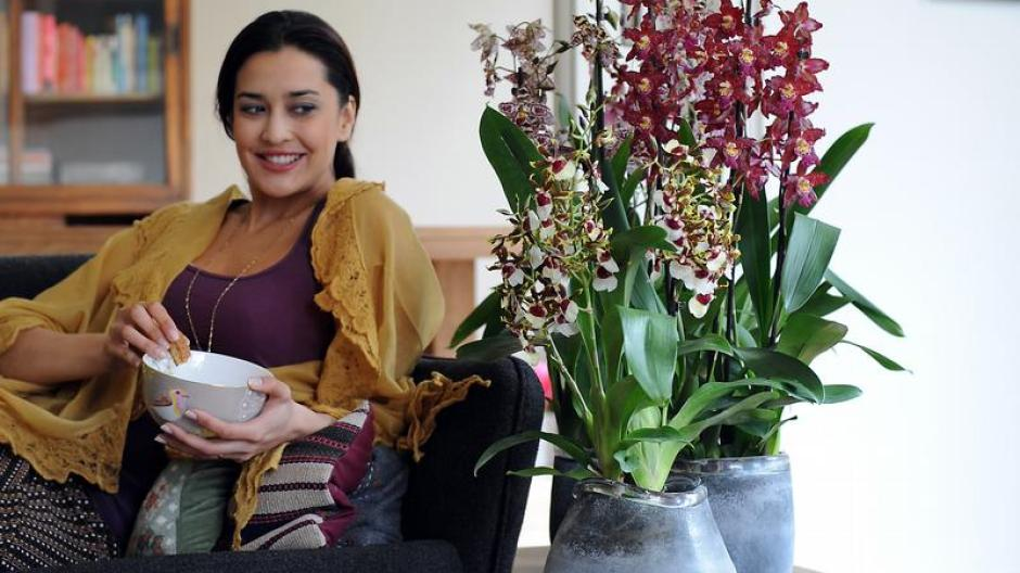 Freizeit Im Herbst Braucht Die Orchidee Viel Sonne Bauen Wohnen