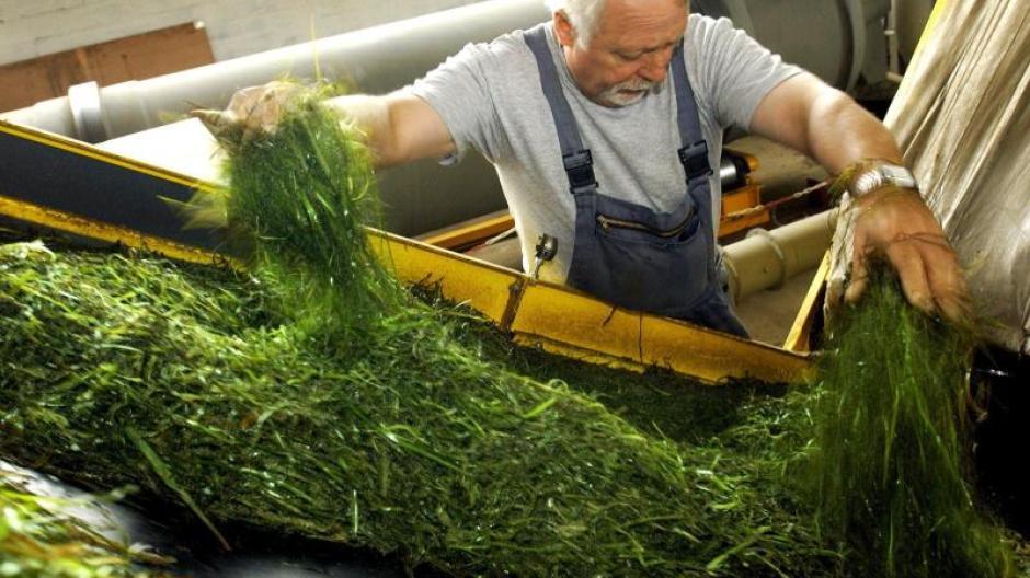 Umwelt Seegras Und Glaswolle Naturliche Dammstoffe Furs Haus