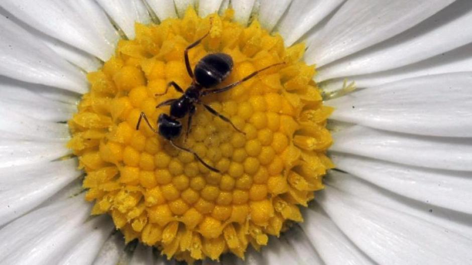 wie vertreibt man ameisen amazing insekten vertreiben. Black Bedroom Furniture Sets. Home Design Ideas