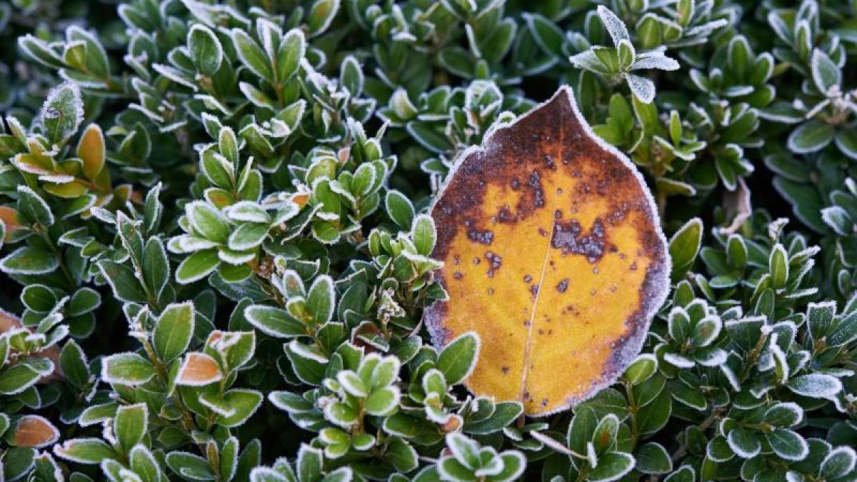 wetter und garten jetzt kommt der frost welche pflanzen sie reinholen sollten nachrichten. Black Bedroom Furniture Sets. Home Design Ideas
