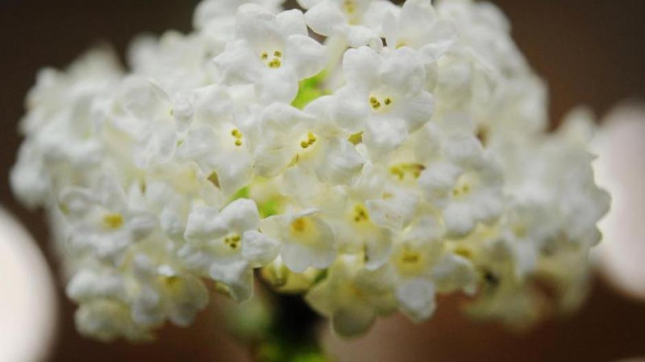 Freizeit Blüten Im Winter Der Schneeball Schafft Das Bauen