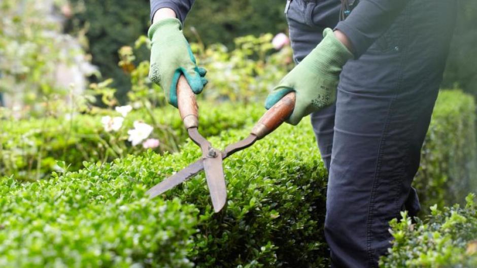 Freizeit Buchsbaum Zum Frühlingsbeginn Pflanzen Bauen Wohnen