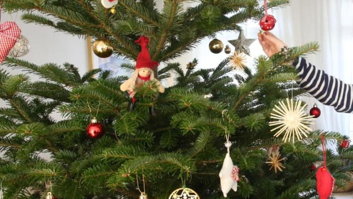 augsburg m nner stehlen christbaum und bringen ihn. Black Bedroom Furniture Sets. Home Design Ideas