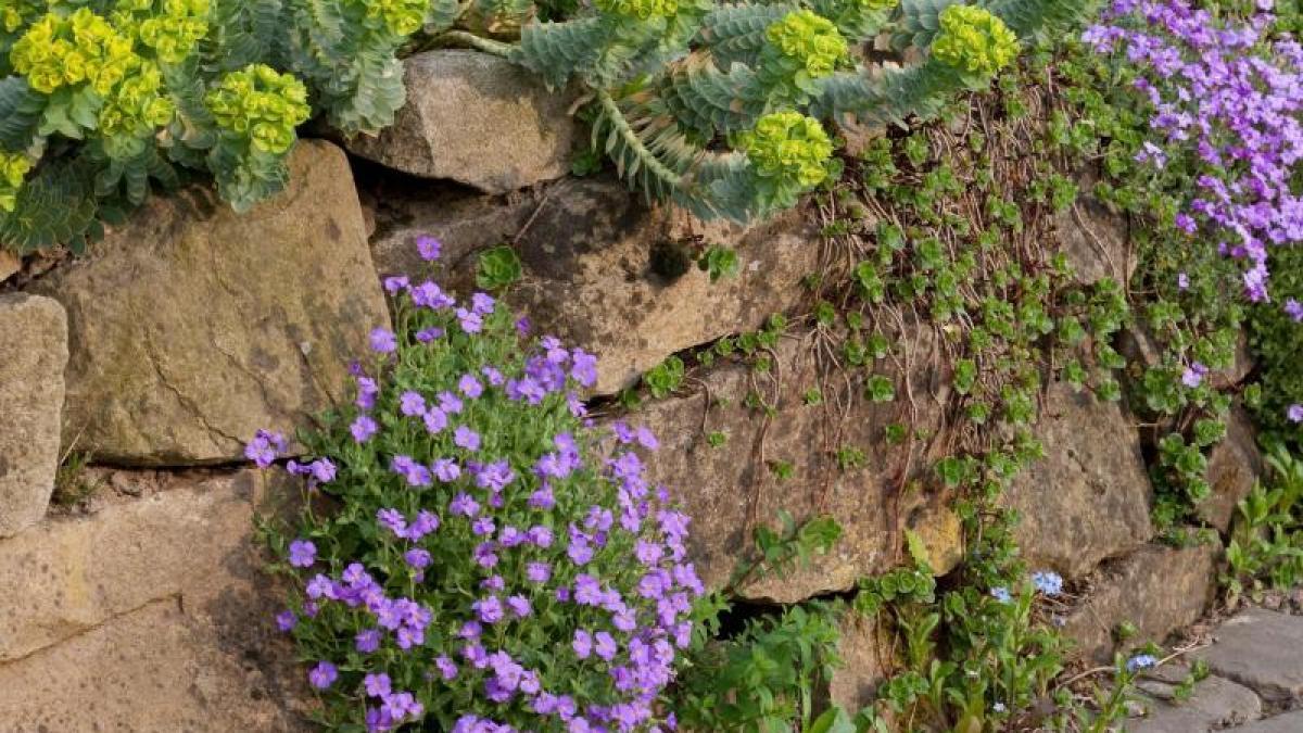 freizeit: bepflanzte trockenmauer im garten bauen - bauen & wohnen