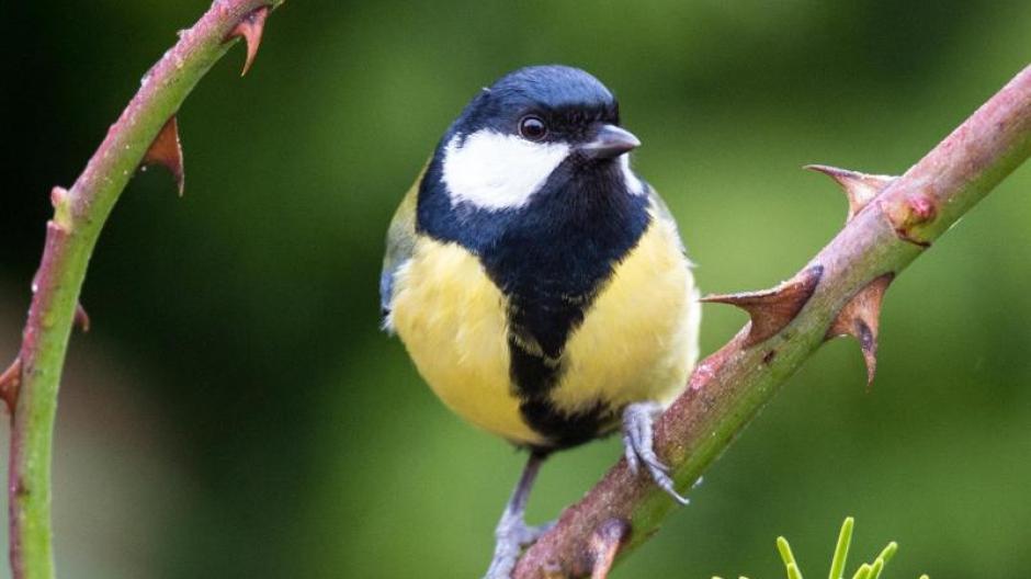 Vogelgezwitscher Zwitscher Zeit Wann Welcher Vogel Mit Seinem