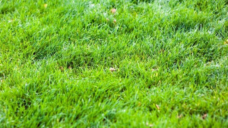 Freizeit Herbstanfang Im Oktober Den Rasen Vertikutieren Bauen