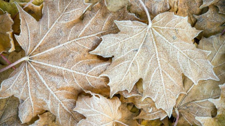 Freizeit: Alter Gärtnertrick fürs Frühbeet: Herbstlaub unterheben ...