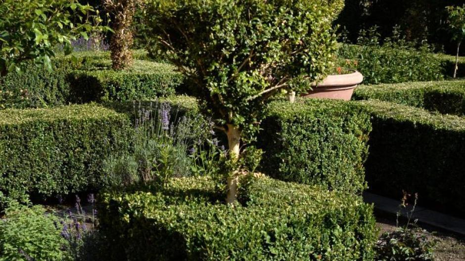 Freizeit Buchsbaum Leidet Unter Plagen Alternative Suchen Bauen