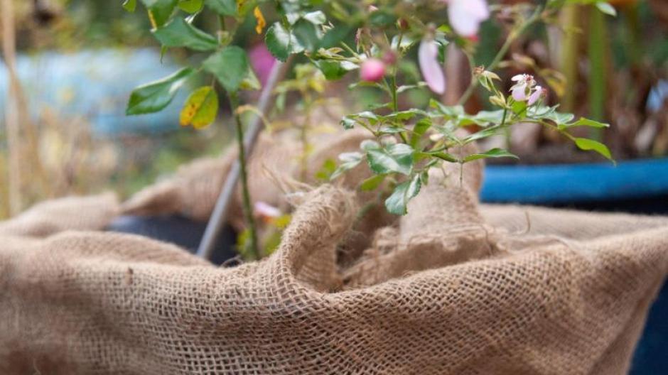 Ratgeber So Machen Sie Ihre Pflanzen Und Gartenmobel Winterfest