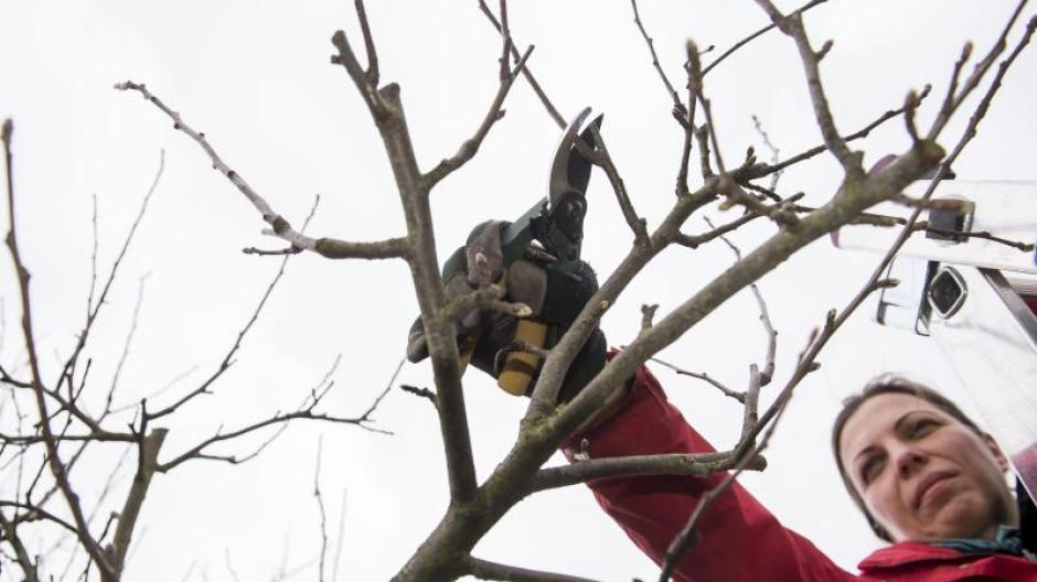 Baume Schneiden Wann Erlaubt Rlp