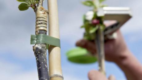 Wemding will für jedes neugeborene Kind in der Stadt einen Baum pflanzen.
