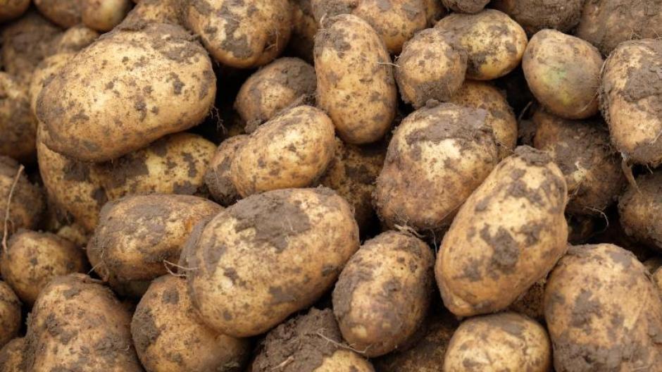 Kartoffeln Wie Gefährlich Sind Grüne Stellen An Kartoffeln Geld