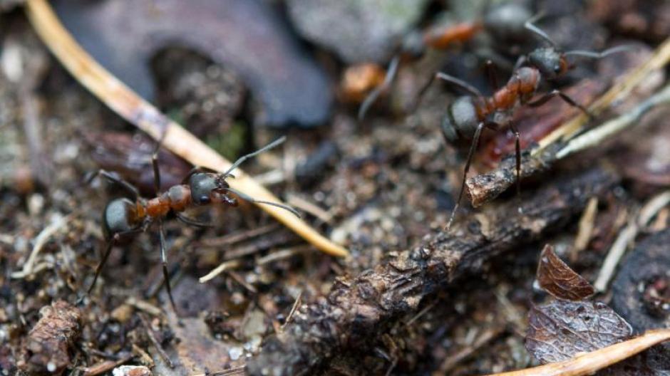 Gartenmythen Erklart Lassen Sich Ameisen Mit Krauterpflanzen