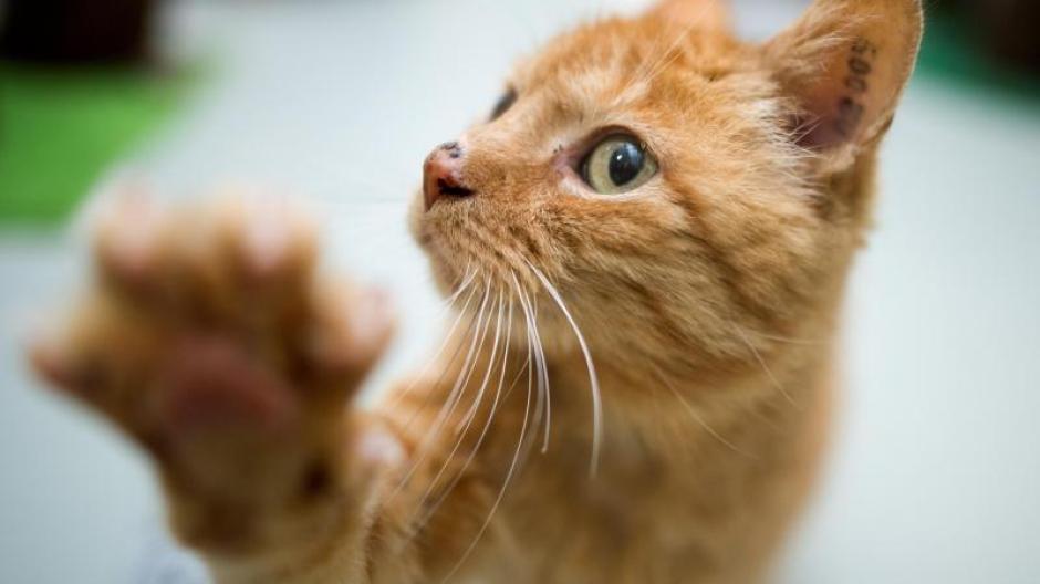 Katzenallergie hilfe asthma bei Asthma &