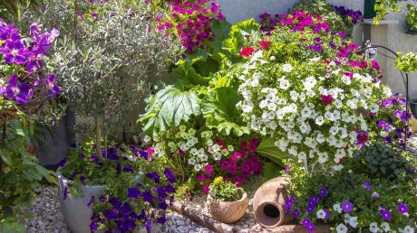 Blumenbeet_Sommer_stockpics_AdobeStock_197172527.jpg