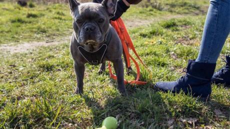 Wer seinen Hund entgegen der Hausordnung immer wieder frei laufen lässt, muss im Zweifel mit der Kündigung rechnen.