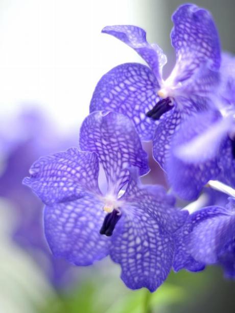 Berühmt Garten: Viel Licht und düngen: So blühen Orchideen öfter - Bauen #KR_91
