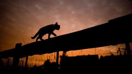 Katze(3).jpg