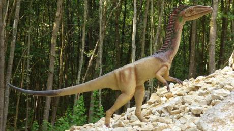 Dieser Coelophysis war aus dem Dinopark geklaut worden.