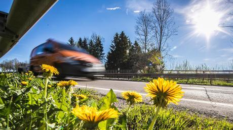 Entlang bayerischer Straßen soll künftig mehr blühen als nur Löwenzahn. Das Artenschutz-Paket wird am 8. Mai im Landtag diskutiert.