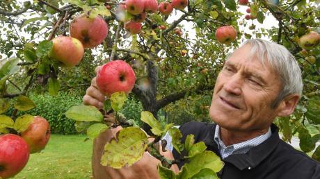 Anton Klaus in seinem Garten im Unterallgäuer Oberneufnach: Dort wachsen 500 verschiedene Apfelsorten. Hier begutachtet er einen Gartenmeister Simon. Dieser gilt als ausgesprochen gesund.