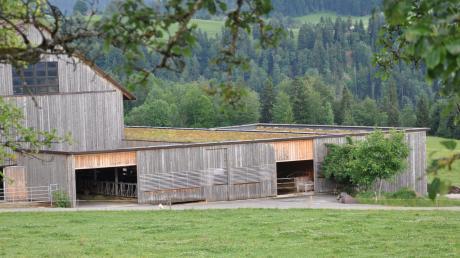 Ein Stallbau, der gerade aufgrund seiner Begrünung des Daches viel Zuspruch findet. Ein Allgäuer Bauberater setzt sich dafür ein, dass Zweckmäßigkeit, Ökologie und Tierschutz bei der Architektur miteinander verbunden werden.