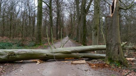 """Nach Sturmtief """"Sabine"""" seien die Waldbesitzer mit einem blauen Auge davongekommen, so die ersten Einschätzungen von Förstern und Waldbesitzern am Mittwoch."""