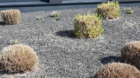 Gärtner, die zu viel Stein verwenden, haben es zunehmend schwerer.