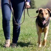 In Senden haben sich zwei Hundebesitzerinnen gezofft.