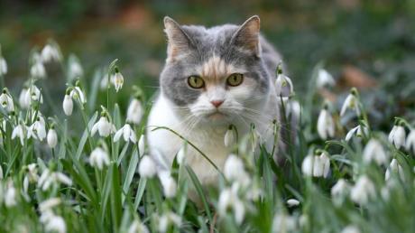 Eine neue japanische Studie zeigt: Katzen hören, wenn man sie beim Namen ruft.