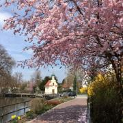 Leserbild-Behrends-Frühlingsgefühle Frühling